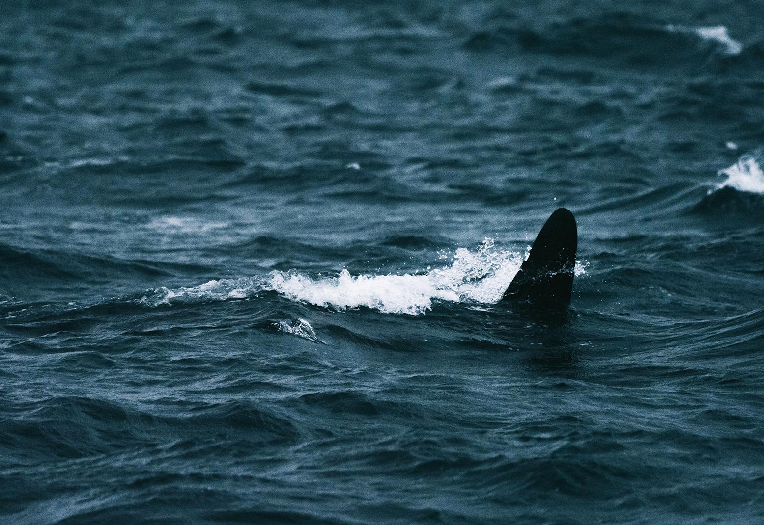 Luontokuvaaja Marinella Himari